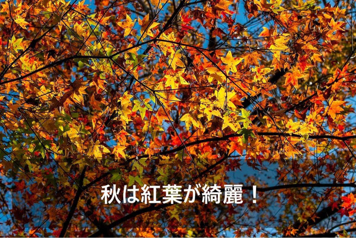 秋にグランピングするメリットとして秋は紅葉が綺麗なことがあげられることを示した画像